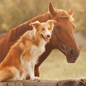 gestione altri animali